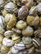 Market shopping - live snails