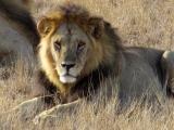 Tsavo East National Park, Kenya | GalanaConservancy