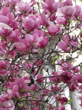 Spring in Washington, DC