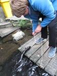Eel Feeding - Willowbank Wildlife Reserve, Christchurch, New Zealand