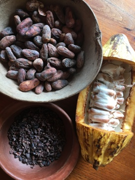 Cacao Plant Pod
