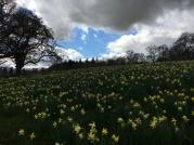 Cringletie in the spring