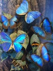 Panama's Butterflies