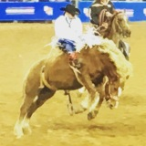The World's Largest Rodeo – Know Before You Go | Houston,TEXAS
