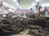 Removing the stem and stacking tobacco at AJ Fernandex
