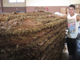 Stacking room for the many varieties of tobacco