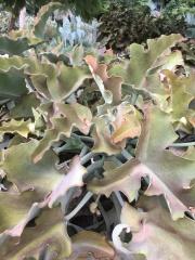 Super cool succulent